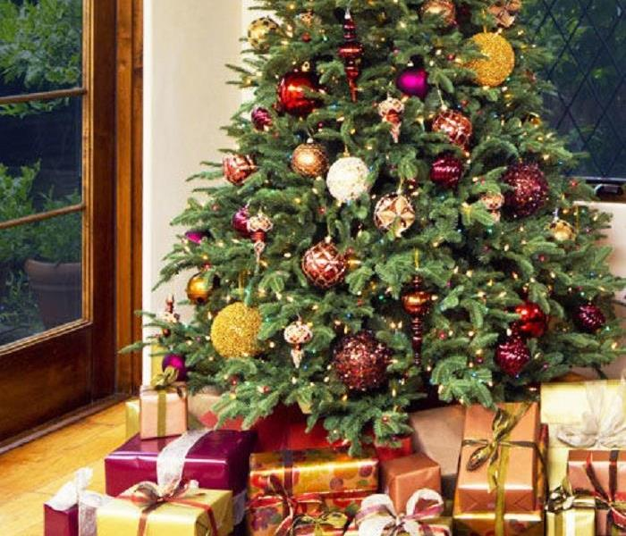 Mold Remediation Live Christmas Trees May Be a Source of Mold