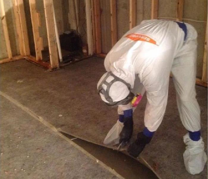 Mold Remediation Protect Yourself When Handling Mold