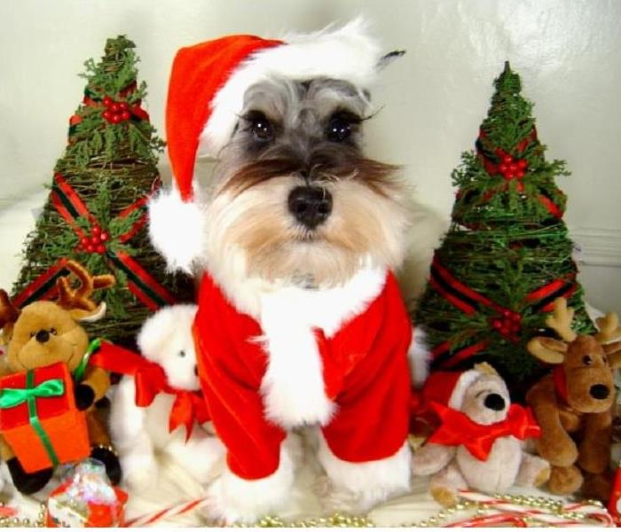General Protect Your Pets From Holiday Hazards!